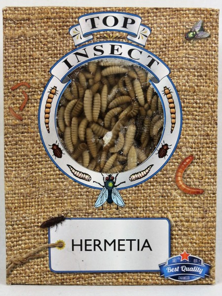 Hermetia (Soldatenfliegenlarven)