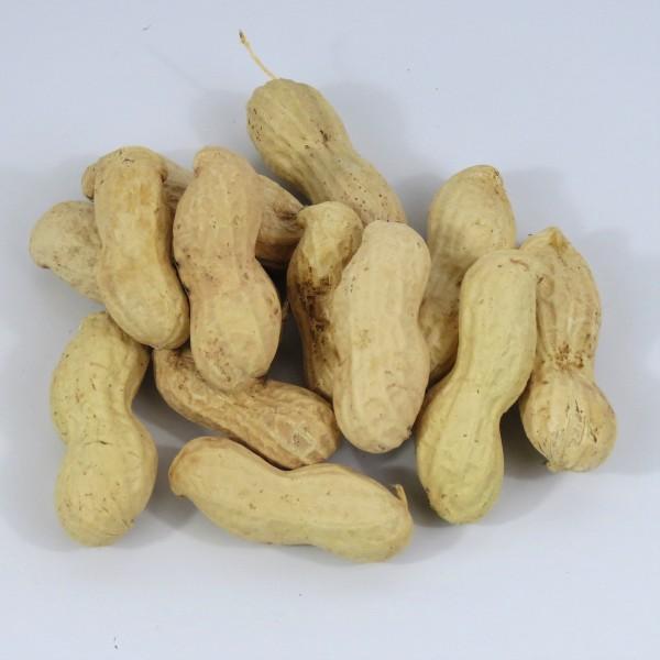 Erdnusskerne in Schale