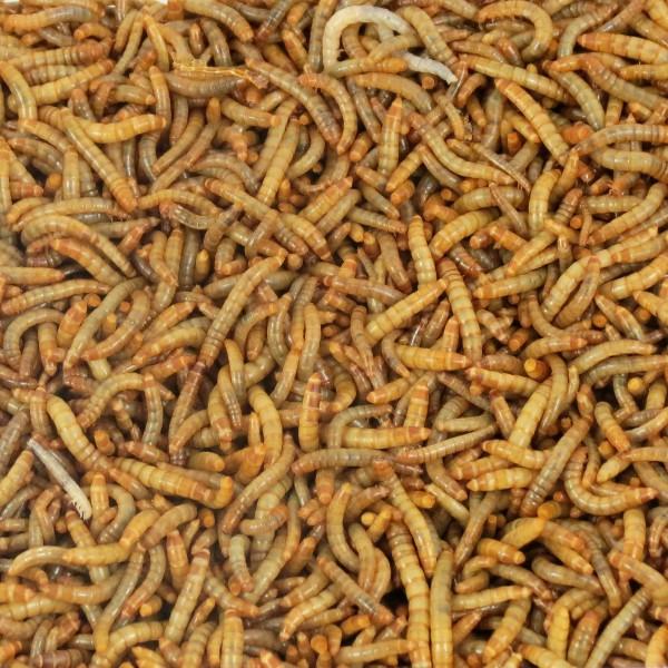 Lebende Mehlwürmer